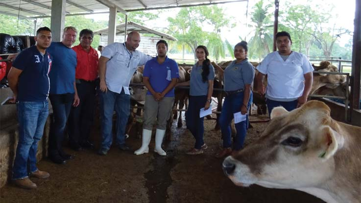 Dairy hub project in Honduras