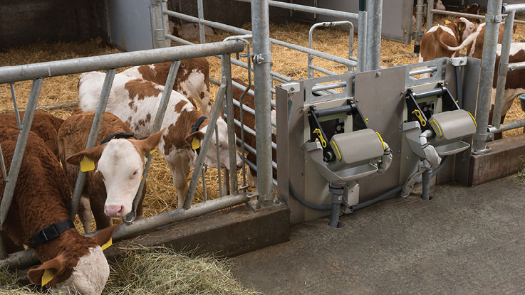 Calf and hygiene box